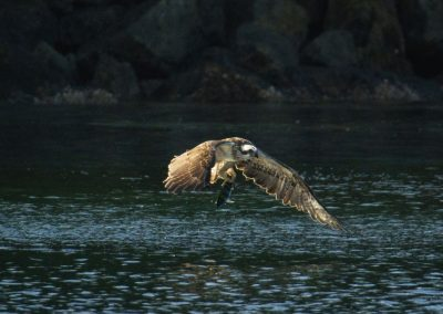 Eagle - Sali Bay, South Halmahera